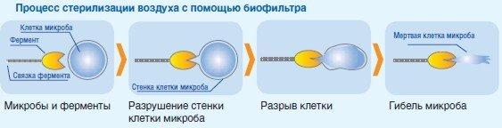 Принцип работы биологического фильтра